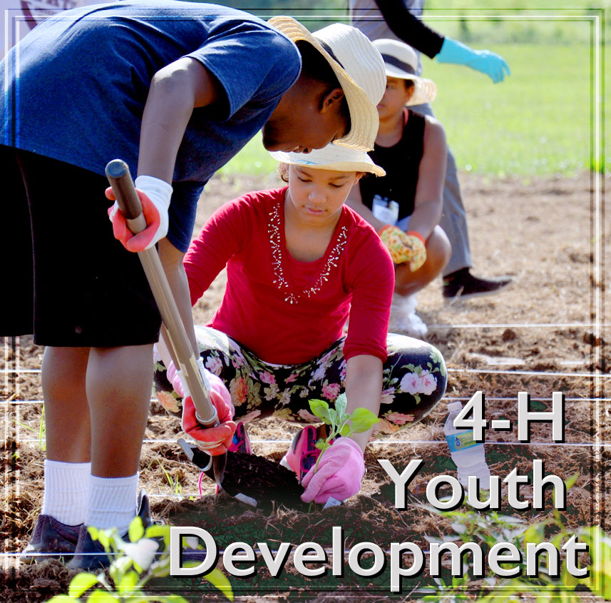 link to 4-H Youth Development page, 4-H Youth Development